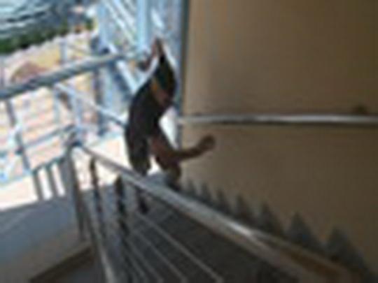 Běh do schodů - 8. ročník
