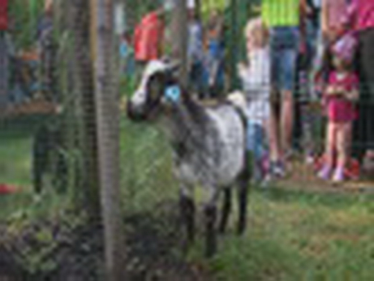 Den dětí s otevřením Mauglího ranče