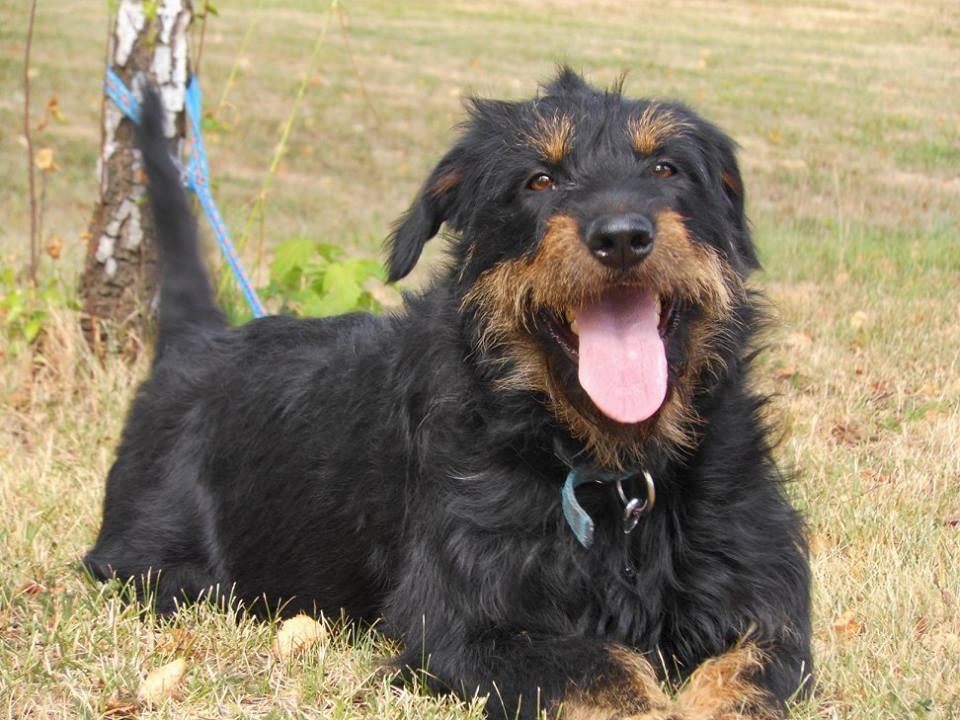 Volně pobíhajících zatoulaných psů v Bohumíně ubylo