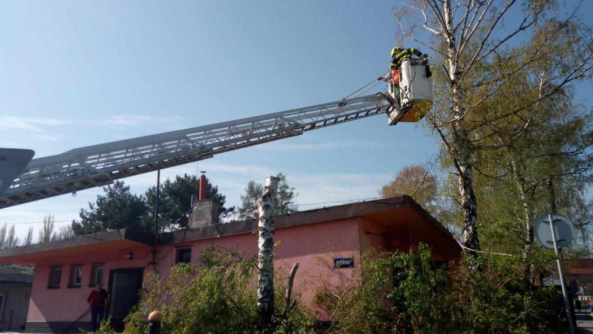 Dobrovolní hasiči odstraňovali seschlé břízy u samoobsluhy ve Vrbici