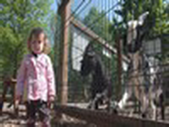Mauglího stezka a ranč se zvířaty znovu v provozu